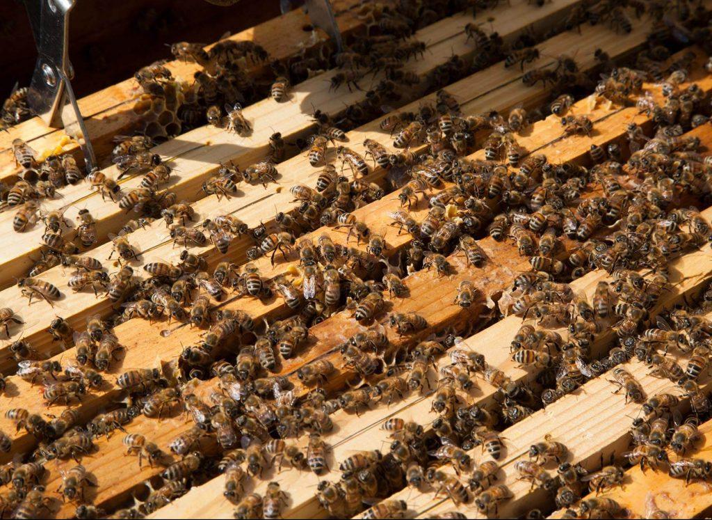 telai arnie api progetto campofiorito fienilnuovo1644