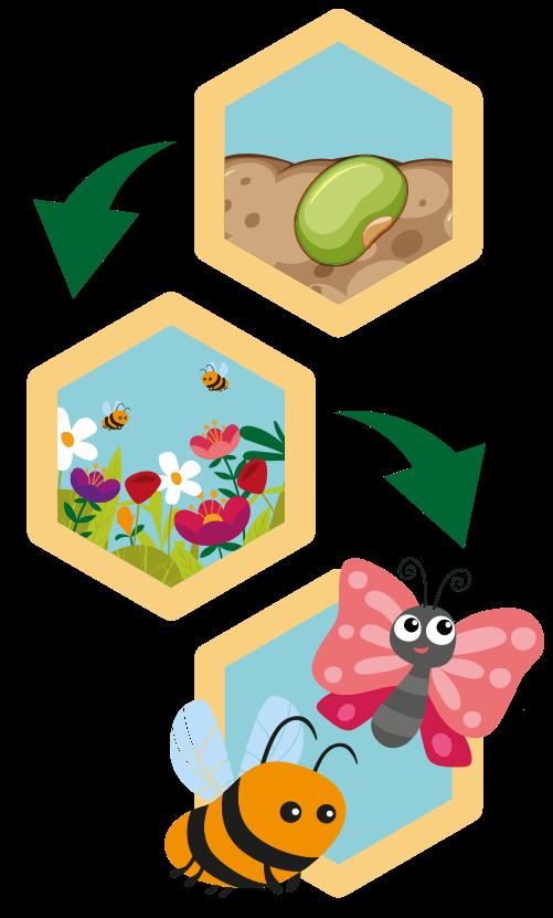 le fasi che egue fienilnuovo per prendersi cura delle api nel progetto campofiorito